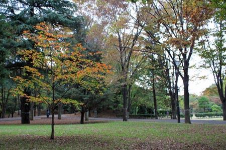 府中の森公園.jpg