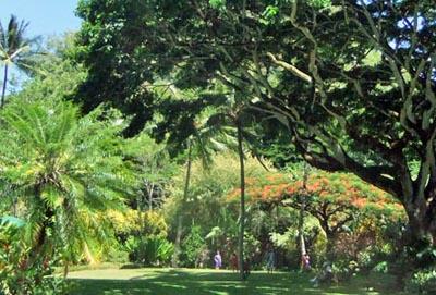 Hawaii2Beachpark.jpg